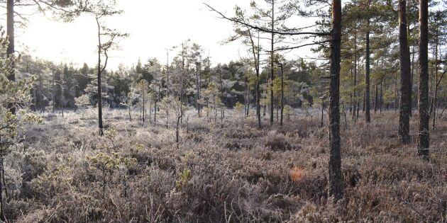 """""""Svenskt skogsbruk är bättre än så"""""""