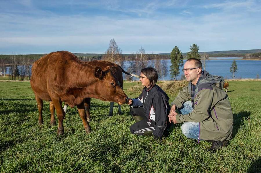 Johanna och Per Hellström gårdsmejeri i Södra Svedjan. Foto: Erland Segerstedt
