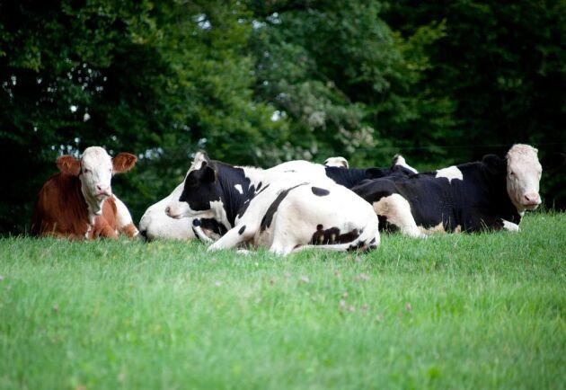 Arla meddelar att avräkningspriset för både konventionell och ekologisk mjölk ligger stilla i maj.