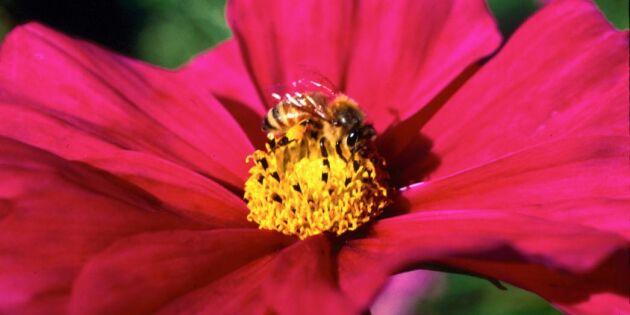 """""""Pollinering ska vara lika viktig som klimatfrågan"""""""