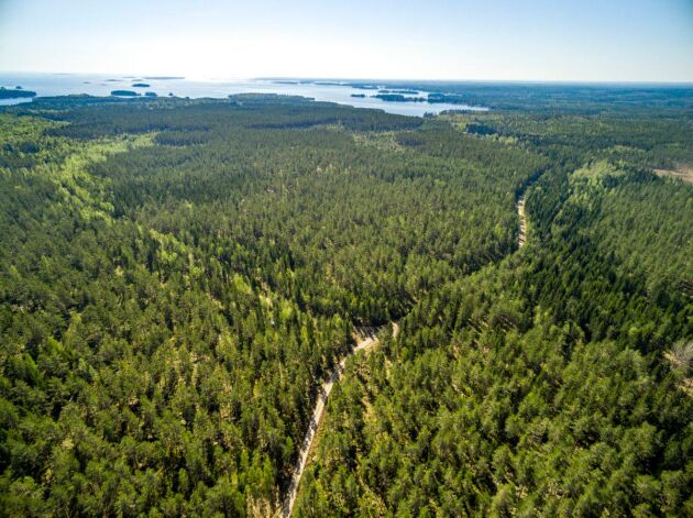 Totalt utgörs fastigheten av 5 500 hektar produktiv skogsmark.