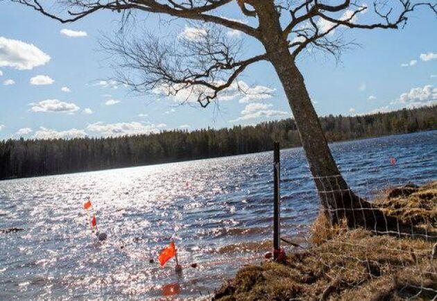 Om hagen gränsar mot vatten är det viktigt att stänga gränsen. Både varg och lo är duktiga simmare.