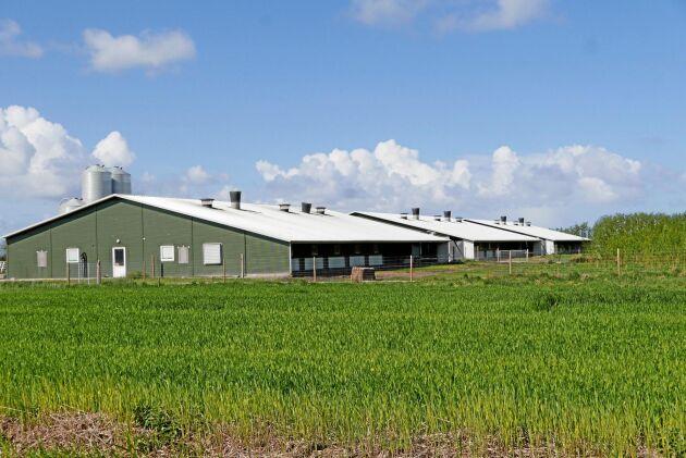 Pilegården på södra Jylland är en av de lantbruk som har fått stöd av Ekofonden.