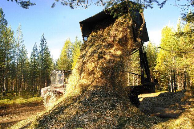 EU-kommissionen vill se hårdare regler för att skog inte ska skövlas i jakten på biomassa. Arkivbild.