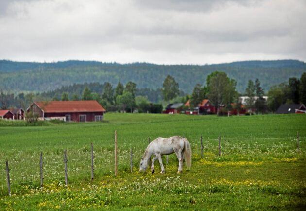Med denna utsikt från gården är det inte konstigt att företaget fick sitt namn. Långt där borta skymtar Kilsbergen.