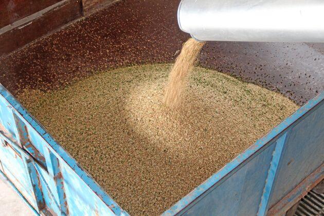 Ur 46 kubikmeter spannmål rensades 40 kubikmeter fodersäd fram ...