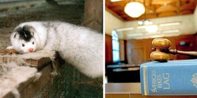 Ledare för djurrättsaktivister ställs inför rätta