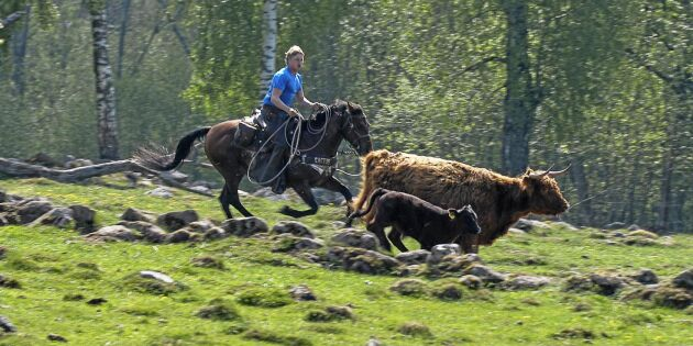 Falköpings cowboy gillar livet i sadeln