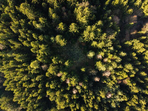 Av de fem dyraste skogsfastighetsaffärerna förra året låg tre i Norrland, och av de affärer som var störst arealmässigt låg fyra av fem i Norrland.