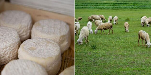 Lillängens gårdsmejeri - mer än bara ost
