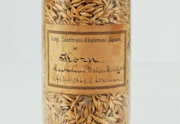 En av fröburkarna med korn odlat i Kvikkjokk 1867.