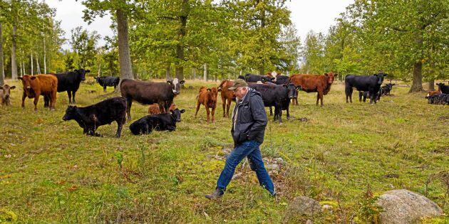 Arnes räntekrav på Jordbruksverket: 160 000 kronor
