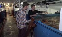 Jättens miljoner ger skjuts för Gårdsfisk