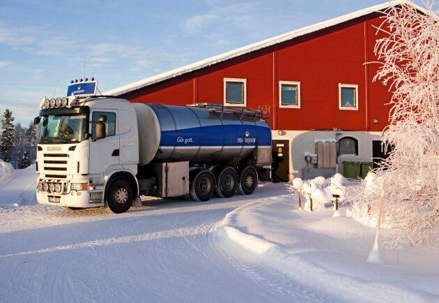 Norrmejerier hämtar mjölk på en gård.