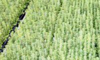 Förslag på nya regler vid plantering