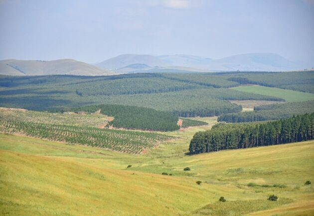 Skogsplanteringarna täcker drygt en procent av Sydafrikas yta, vilket nästan motsvarar Västergötlands storlek.