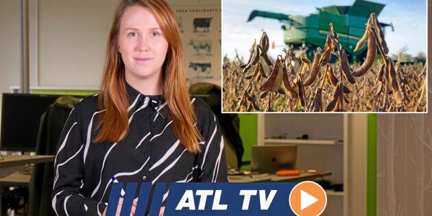 ATL TV: Andra året med egen soja