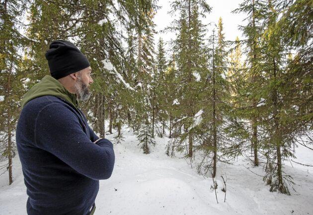 Optimalt görs en blädning i en fullskiktad granskog med träd i alla åldrar. När ljuset släpps ner ökar tillväxten i de mindre träden.