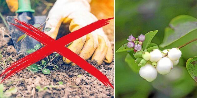 """Lista: Fem """"nya"""" trädgårdsväxter som hotar den svenska naturen"""
