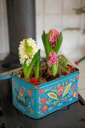 Hyacinter på vedspisen i köket i en färgglad retroburk.