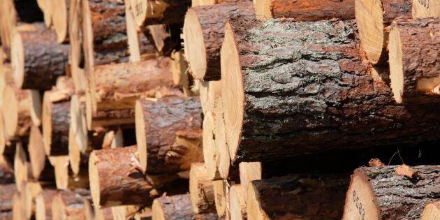 Bra resultat för Mellanskog