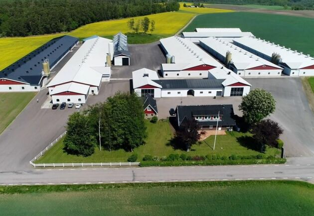 """Tre högar i Halmstad: """"Köpare kan vara någon som redan är i branschen eller företagare i livsmedelsbranschen. Storleken gör att finansieringen är en nöt att knäcka, med stor egen kapitalinsats"""", skriver Henrik Gustafsson på Ludvig & Co."""