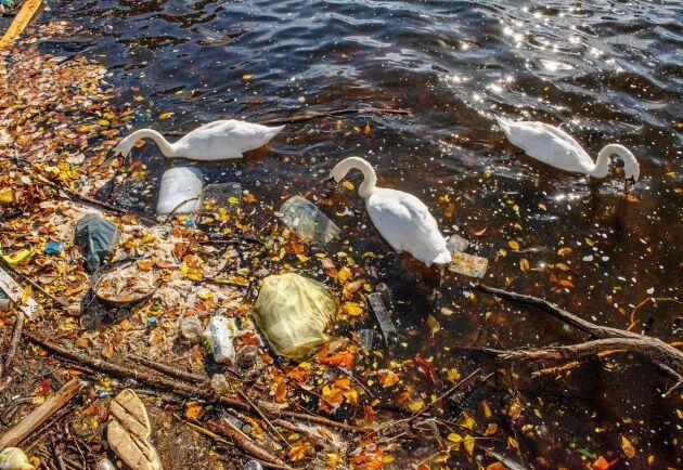 En stor del av mikroplasten sprids via hav, sjöar och vattendrag.