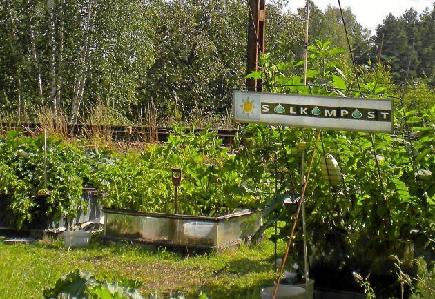 Stor lön för mödan. Bengts odlingar i soljord ger maximalt med mat per kvadratmeter.