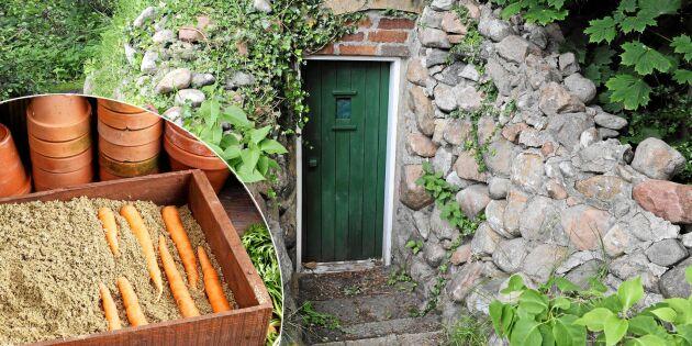 Lands odlingsexpert: Så sparar du skörden inne eller ute