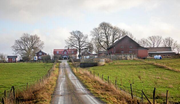 Vändpunkten för Ahmad var när han fick komma till Gunvarbyns islandshästar i Dalsland.