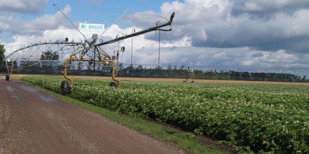 Här vattnas grödorna med återvunnet vatten