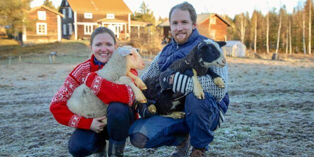 """Christoffer och Caroline sadlade om: """"Vi älskar vårt nya liv med gårdsmejeri och får"""""""