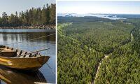 Oändliga skogar till salu utmed Östersjön
