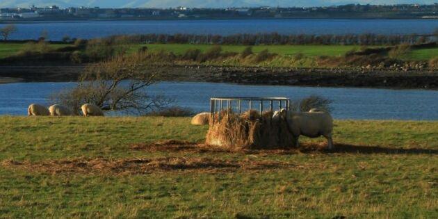 Foderkris oroar på Irland