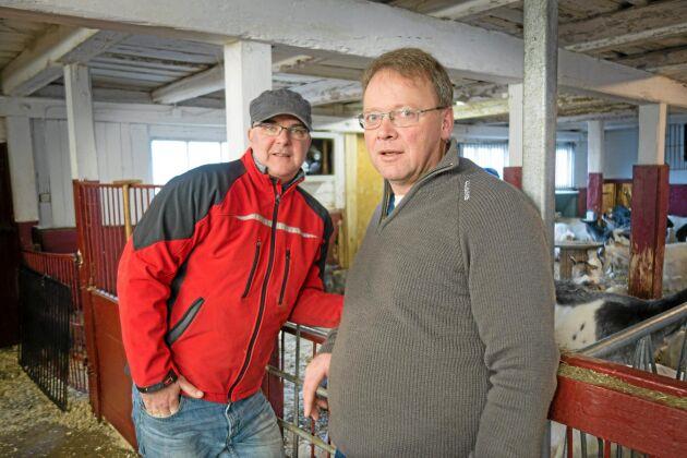 Erik Garberg och Björn Kvist satsar på en småskalig produktion av mejeriprodukter från gårdens egna getter.