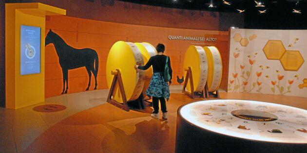 Nöjespark om bondekultur lockar en miljon besökare