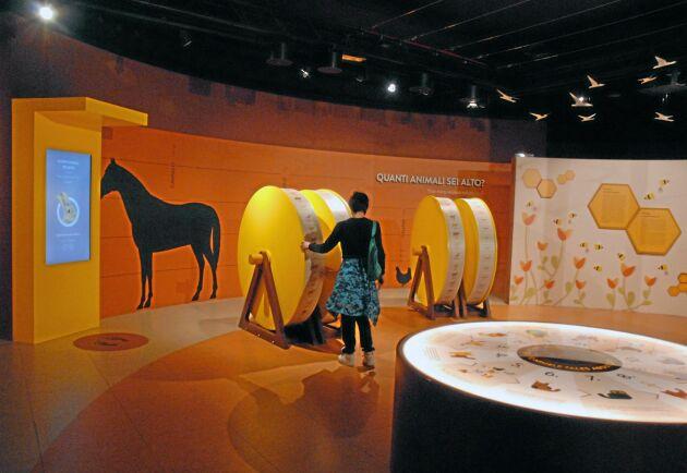 En av temagrottorna kan besökarna lära sig hur djuren låter och även kolla hur många djur som behövs för att komma upp till ens egen längd.