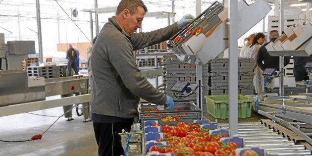 Tomatjätte lockas av lägre löner