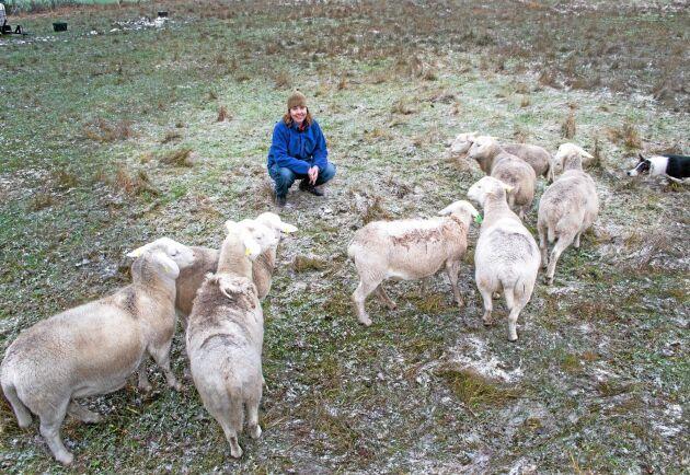 """""""Det händer jättemycket i Fårsverige efter att det blev tillåtet med embryoöverföring"""", säger Anneli som tycker att insättning av importerade embryon kan vara bättre än transport av levande djur för den som vill utveckla sin avel."""