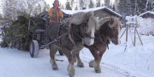 Specialvagnar ger bättre kontakt med hästarna
