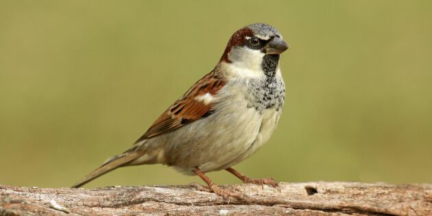 Land reder ut: Så gamla blir egentligen fåglar