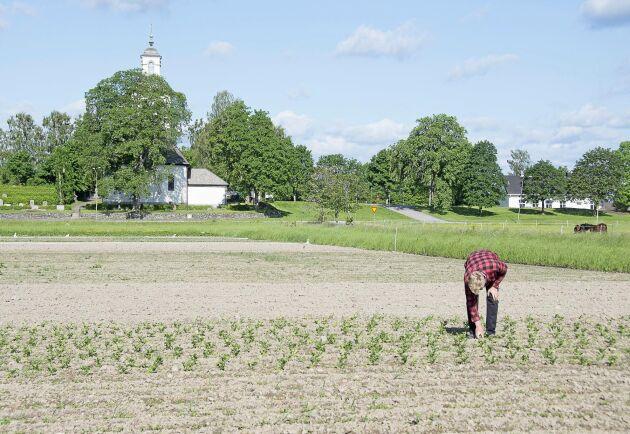 Vid Kyrkan i Grums arrenderar Fredrik Wangsten 2,5 hektar mark vilket gett honom möjlighet att expandera kraftigt.
