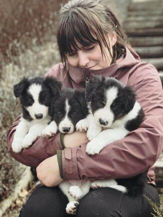 Det var genom uppfödaren till Marlenes bordercollie, som hon började extrajobba med får. Bland annat genom att hjälpa till som avbytare när fårbönder var sjuka eller behövde åka bort.