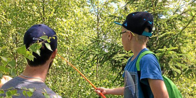 Skogskollo lockade många barn