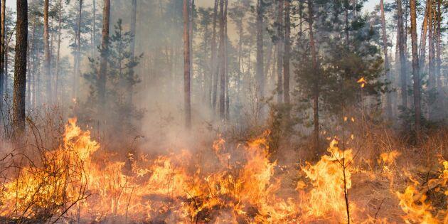 """Myndigheten varnar: """"Extrem brandrisk i halva Sverige"""""""