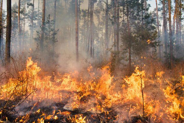 Den extremt torra våren och sommaren har ökat risken för brand i skog och mark. Nu varnar MSB för att elda även i områden utan eldningsförbud.