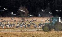 Hungriga fåglar lantbrukarnas mardröm