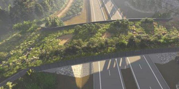 Så ska gröna broar hjälpa djuren!