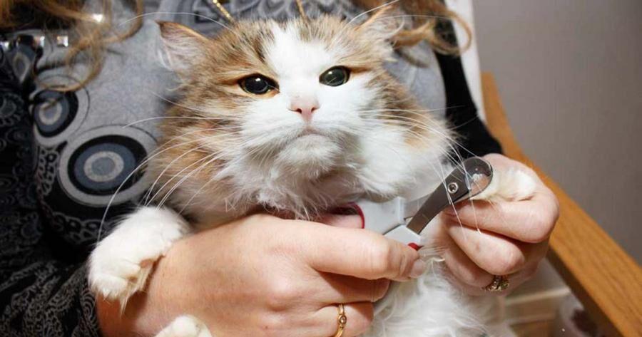 Land.se ger sju tips på hur du kan skämma bort din katt.