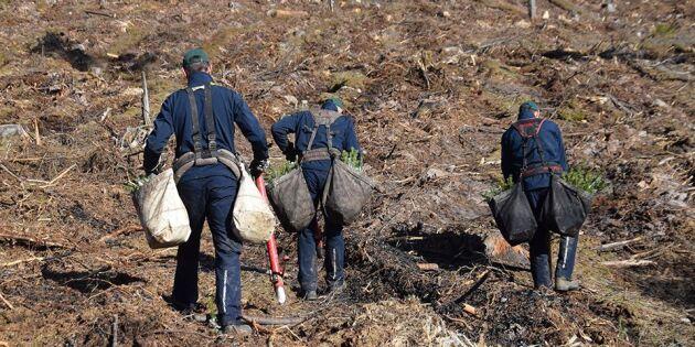 Nu kan skogsarbetare släppas in i Sverige